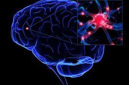 neuro-genesis