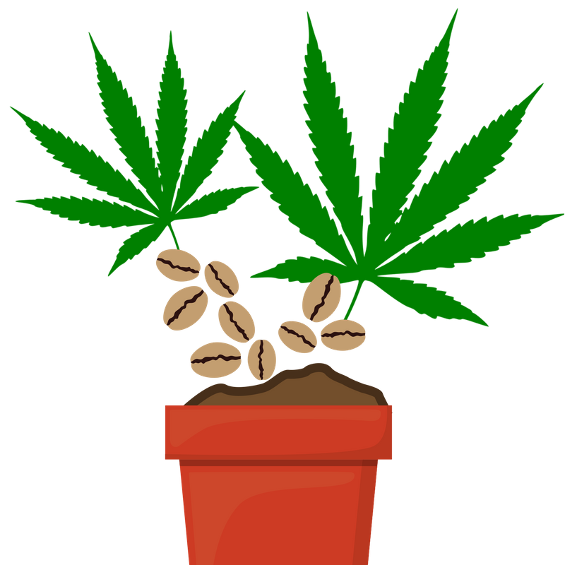 The Definitive Guide to Marijuana Seeds (Types, Strains