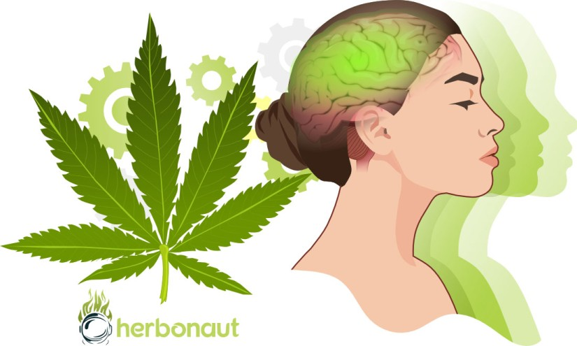 Marijuana's Effect on the Brain