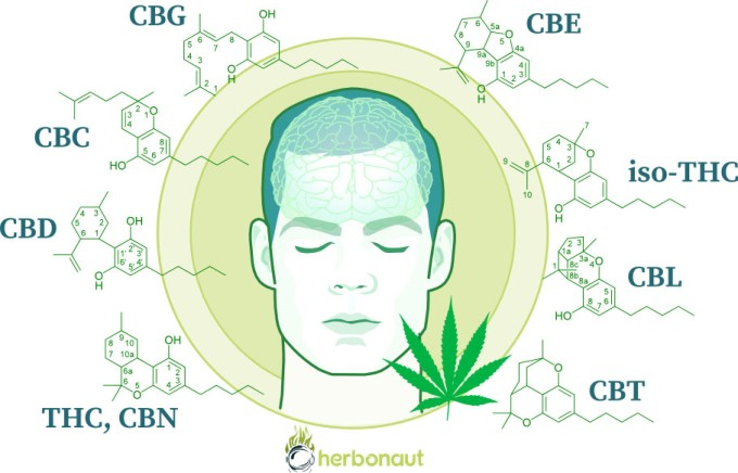How Does Marijuana Affect the Brain?