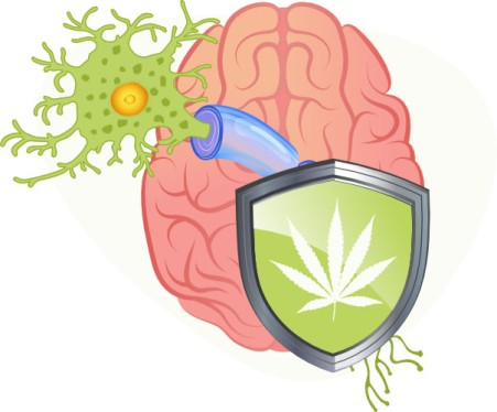 Acute Neuroprotective Effects of Marijuana