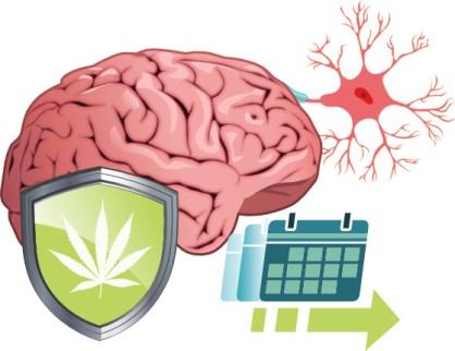 (Neuro)protective effects related to long term marijuana use